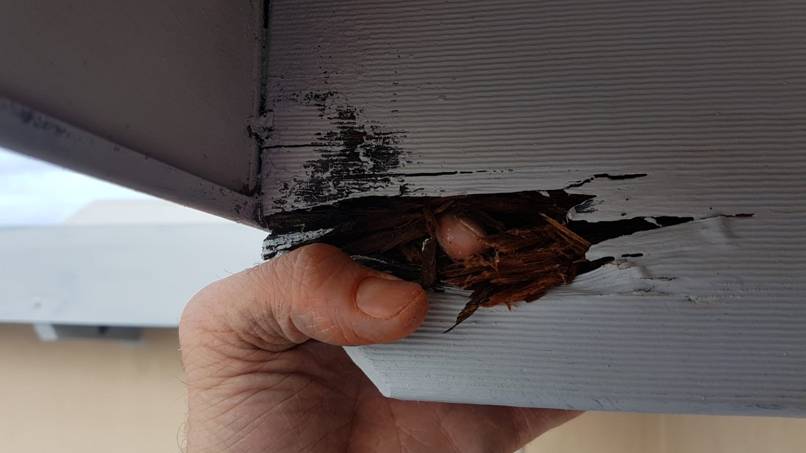 Rotting wood in home